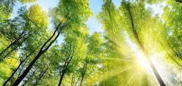 ISO14001 Umweltmanagement Nachhaltigkeit